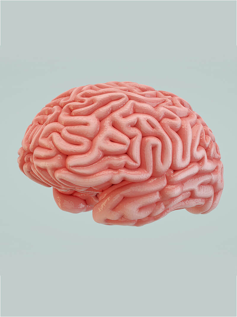 Free Cinema 4D 3D Model Human Brain